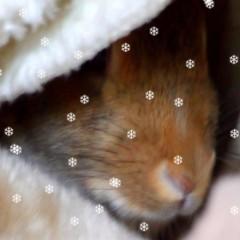 Jungtier Adventis erster Winter