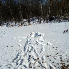 Hoppala? Schneewildkaninchen-Häsin auf Benjis Sonntagsbahn