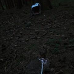 Bald im Blog: Mein erster Waldspaziergang * Erlebnisbericht von Wildkaninchen Plupps! (= Adventi Mira Plurabelle)