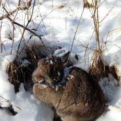 Du bist zu groß für meine Schneeschutzhöhle!