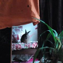 Huhu, hier sitzt das frei hoppsende Wohnungskaninchen Benji
