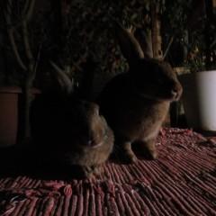 Flori und Plupps * Moody Bun