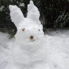 Bestes Versprechen: Schneehäsin ante portas