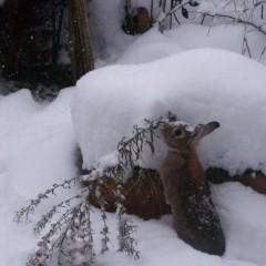 Lieblingsbilder: Hoppilina im Schnee