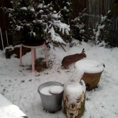 Miri im Schnee Dezember 2017
